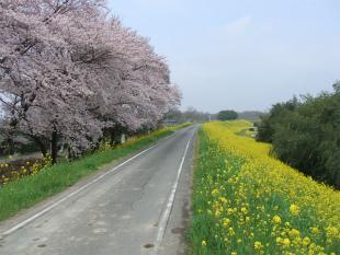 春ですね~・・・(^_^)